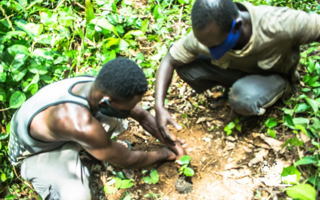 Cape Three Points CREMA Engages in Reforestation Exercise